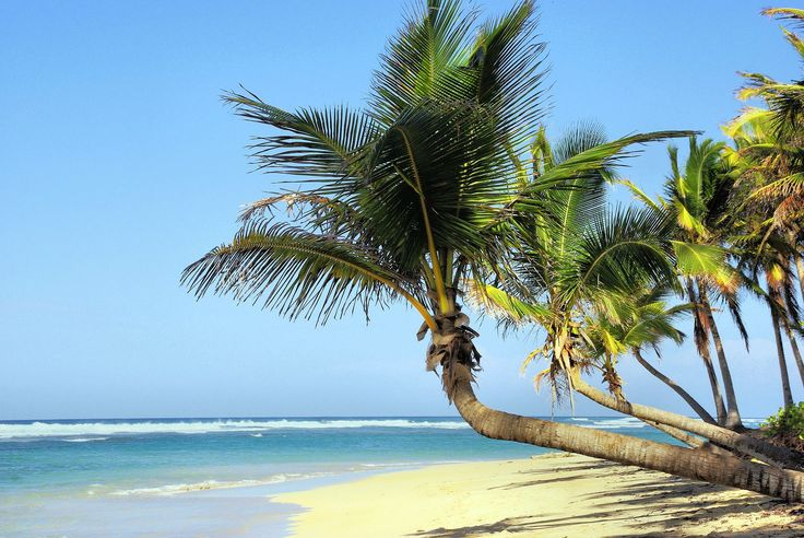 Have you ever dreamed about tropical sandy beaches with smooth waves and…