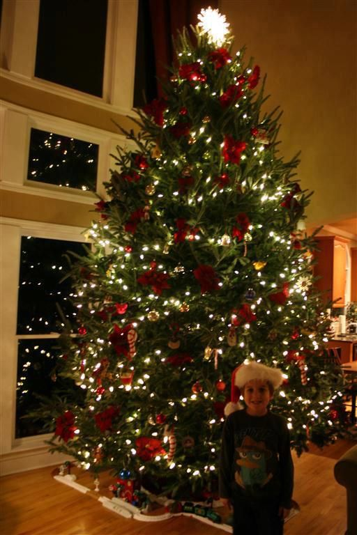 pictures of real christmas trees decorated | My Web Value