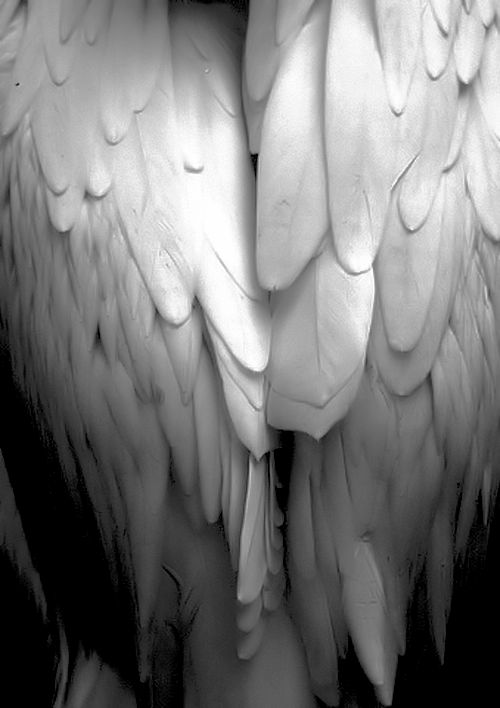 Embraced in the wings of love #sixwords  ©{zb}