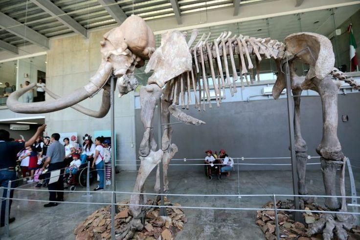 Os mamutes-lanosos do Alasca, pertencentes a um dos últimos grupos sobreviventes da espécie, provavelmente morreram de sede quando o nível das águas salgadas do mar aumentou em torno da ilha onde viviam, 5.600 anos atrás, revelou um estudo publicado esta segunda-feira.
