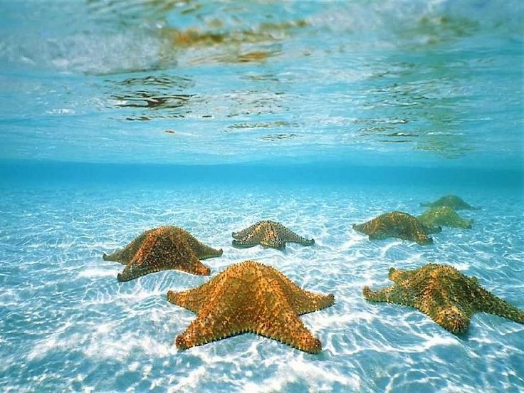 Google Image Result for http://2.bp.blogspot.com/-z5dR0YWLOP4/T_ki-h_h_RI/AAAAAAAAANI/Rz-bQz2YCQ8/s1600/sea+stars+beautiful+starfish+animals+of+the+coastal+areas+of+florida+miami+canada+australia+france+russia+uk+philopines+mexico+africaanimal+pictures.jpg