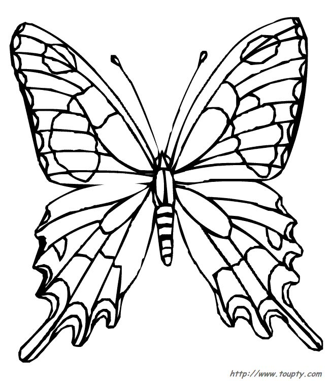 Printable Coloring Pages Of Butterflies Cat Color Drawing Butterfly