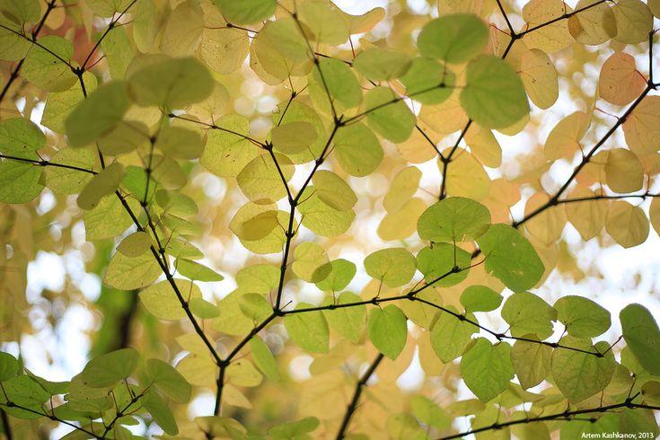 Осенний этюд с желтыми листьями - Красивые осенние фотографии