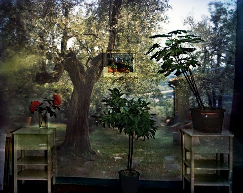 Abelardo Morell: Camera Obscura: Garden With Olive Tree Inside Room With  Plants, Outside Florence, Italy, 2009