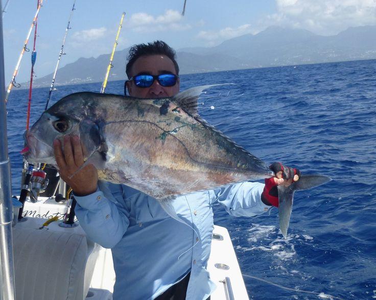 Jolie carangue à plume prise au leurre souple Madatet Fishing : Guide de pêche sportive / Pêche au jig et pêche au Gros en Guadeloupe