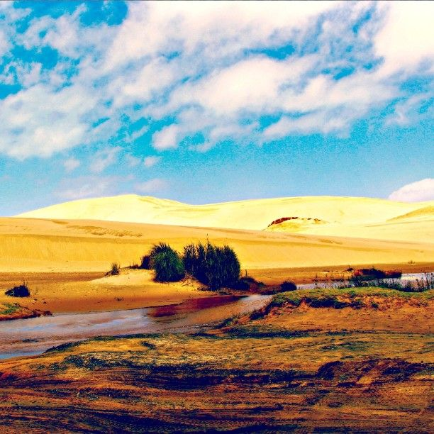 Feeling far from home. Te Paki Sand Dunes, New Zealand
