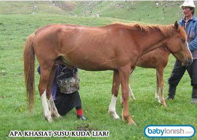 Susu kuda liar diklaim bisa menyembuhkan beberapa penyakit dan meningkatkan gairah seksual. Khasiat susu kuda liar yang melegenda membuat susu ini banyak dicari orang. Seperti apa khasiat susu kuda liar yang sebenarnya?  Mari baca: http://www.babylonish.com/blog/2015/01/apa-khasiat-susu-kuda-liar