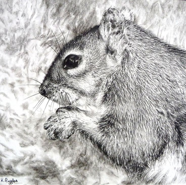 Squirrel original charcoal drawing. $75.00, via Etsy.