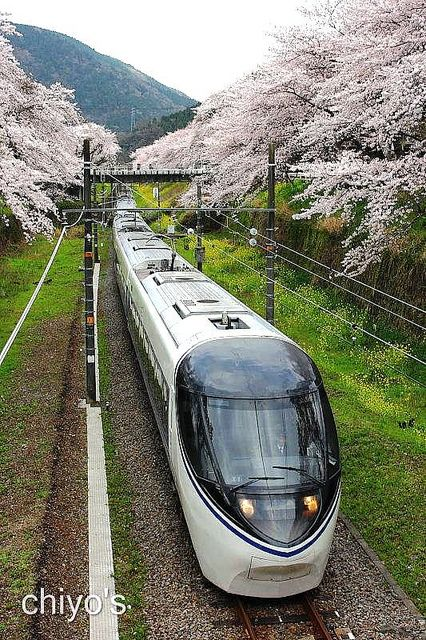Japanese Railway <371series / Express ASAGIRI> | Flickr - Photo Sharing!