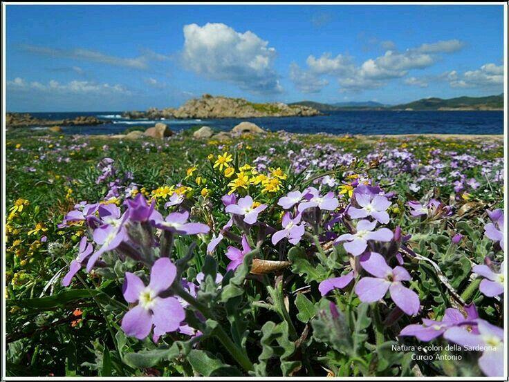 Fioriture primaverili multicolor..vicino al mare