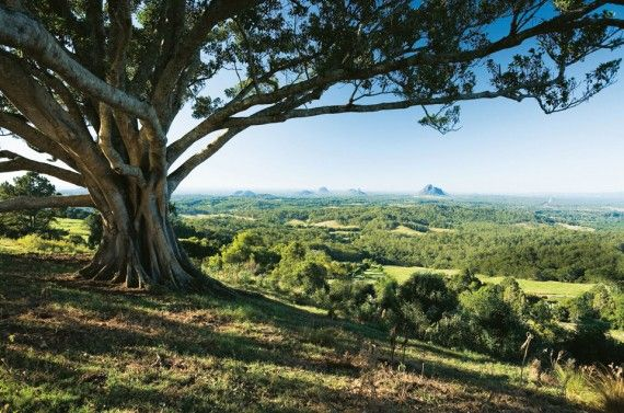 Insider Guide: Sunshine Coast Hinterland #blog #travel #guide