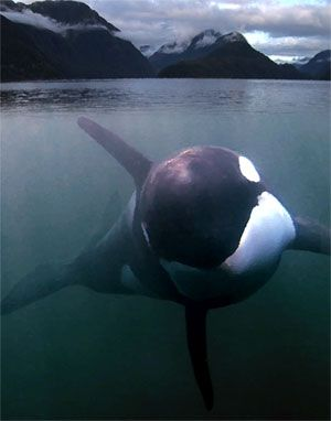Great documentary - free willy story(?)
