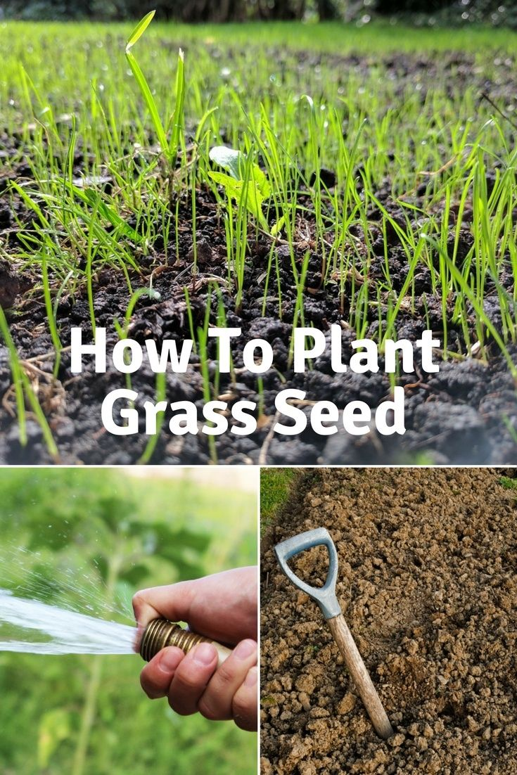How to plant grass seed a 7step guide planting grass