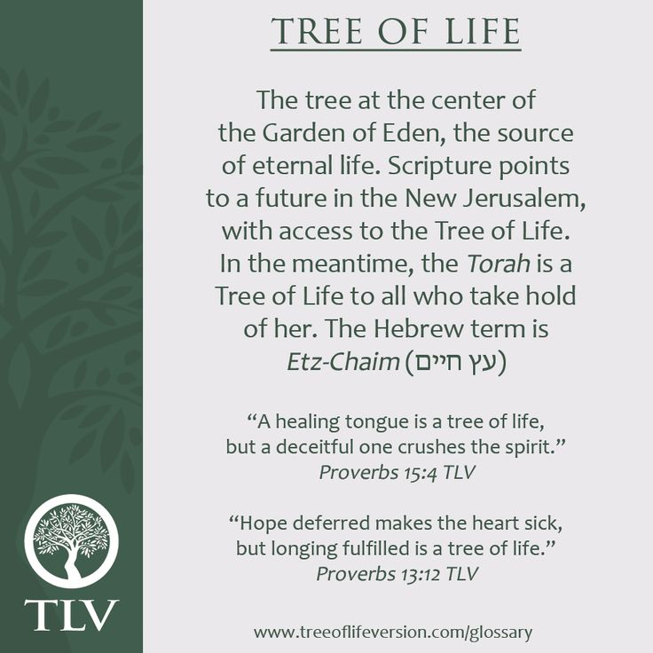 Tlv Glossary Word Of The Day Tree Of Life Tlvbible
