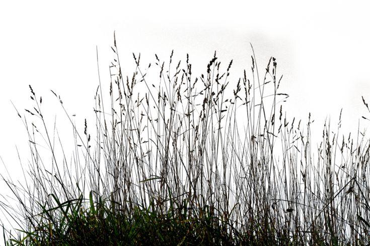 Grass 03 png by gd08.deviantart.com on @deviantART