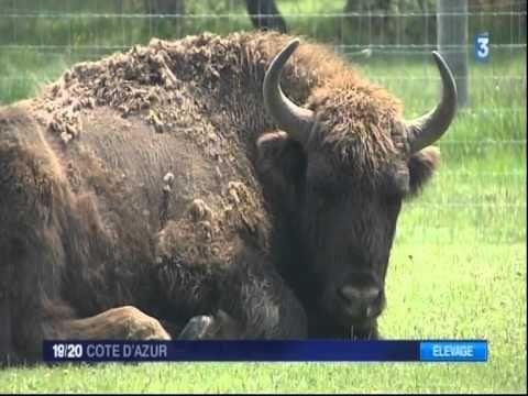 Reserva Biológica Monts d'Azur: Parque Thorenc Bisontes, reserva de animales