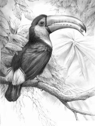 Pencil drawing of bird google search