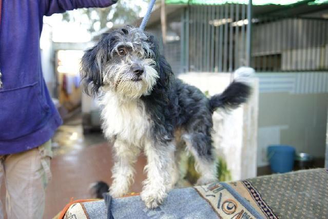 PZ - Adopção de Cão - Cão Rafeiro - Faísca - acolhido(a) por União Zoófila - 3 anos