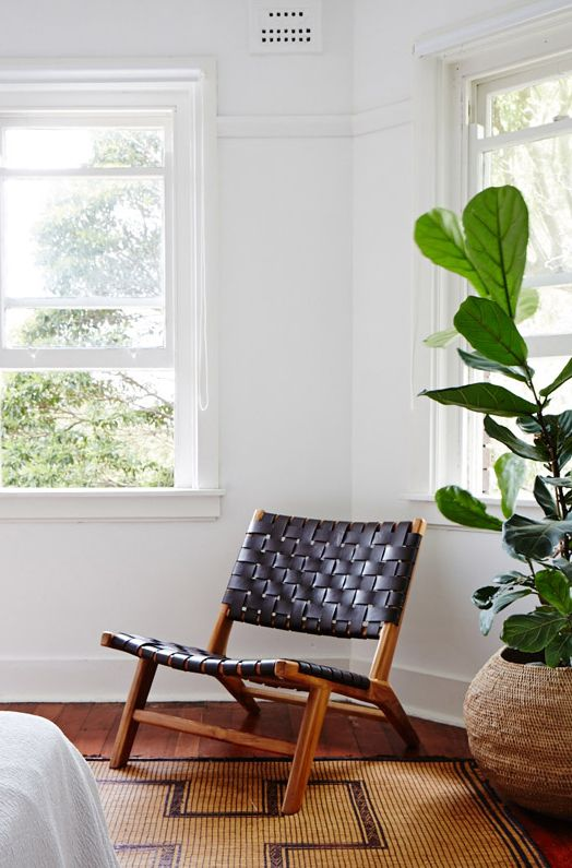 Great chair and indoor plant Green design love the plant too...it's a Ficus Lyrata. see more at www.greendesign.com.au