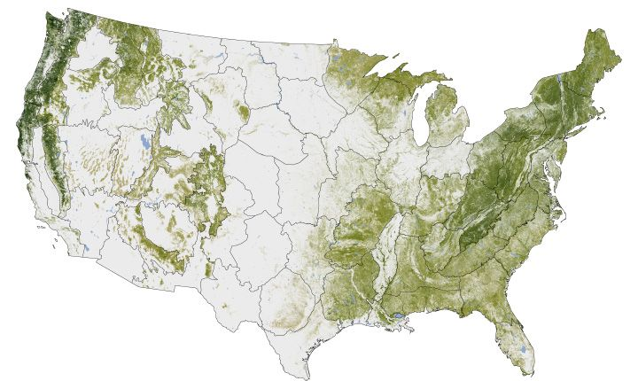 Forests in the U.S. were mapped down to a scale of 30 meters, or roughly 10 computer display pixels for every hectare of land (4 pixels per acre). They divided the country into 66 mapping zones and ended up mapping 265 million segments of the American land surface. Kellndorfer estimates that their mapping database includes measurements of about five million trees.