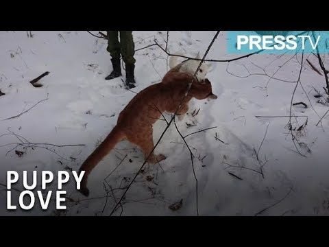 #latestnews#worldnews#news#currentnews#breakingnewsHusky forms unlikely bond with cougar at Russian zoo