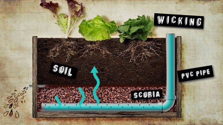 Costa's wicking bed from Gardening Australia.