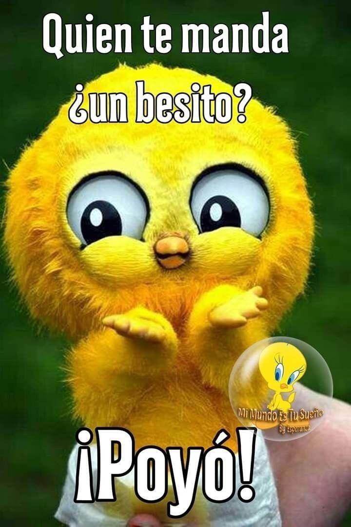 Pin By Maragarita Aispuro On Mis Mejores Deseos Para Ti Funny Spanish Memes Good Morning Greetings Cat Videos For Kids