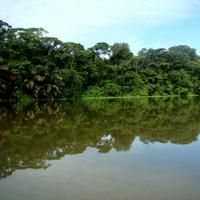 Tortuguero National Park.
