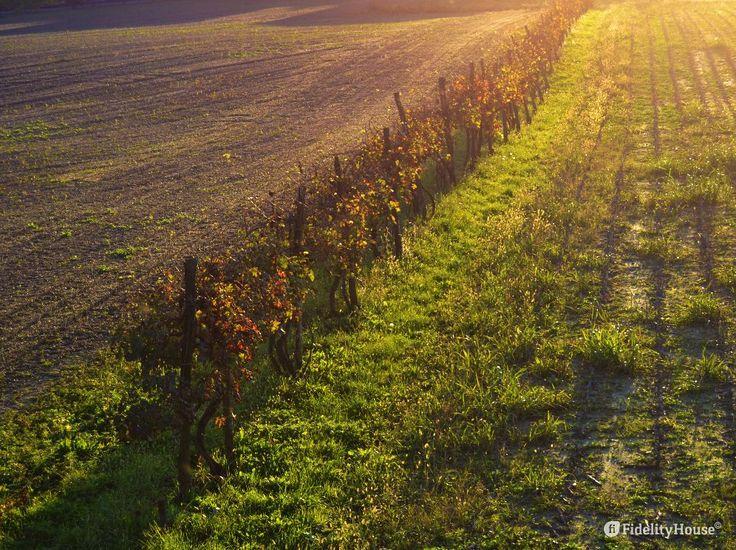 La luce è radente, il sole è al suo tramonto. Tutt'intorno il color oro suscita il ricordo delle cose belle, della strada fatta anche in questo giorno.