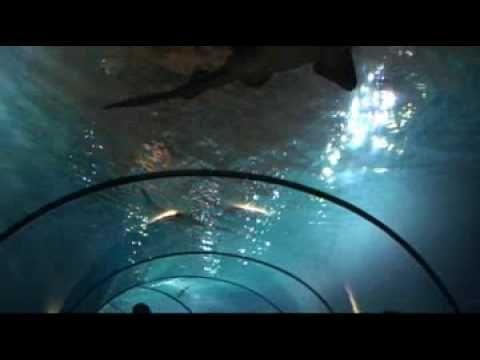 Diergaarde Blijdorp: ontdek het Oceanium