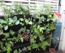 Verticle allotment edible green living wall mounted garden