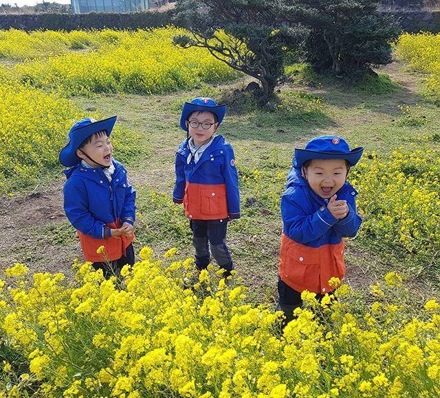 제주도 유채꽃이 만발했어요~^^