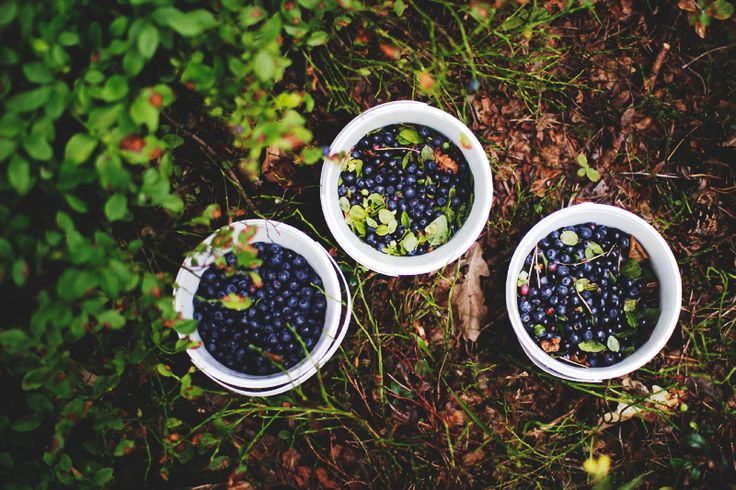freshly picked blueberries.