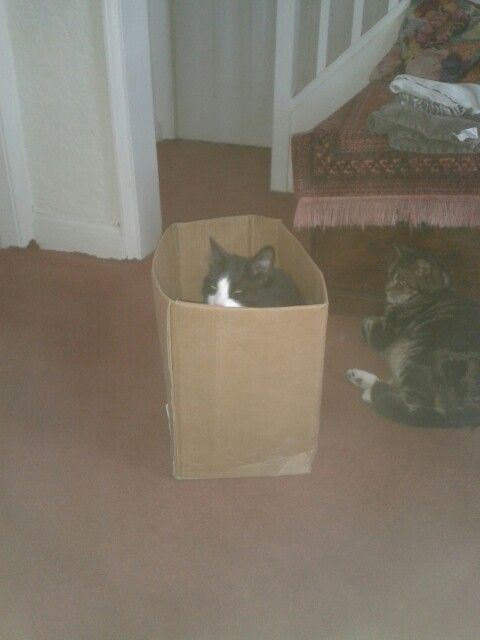 Fred in a box