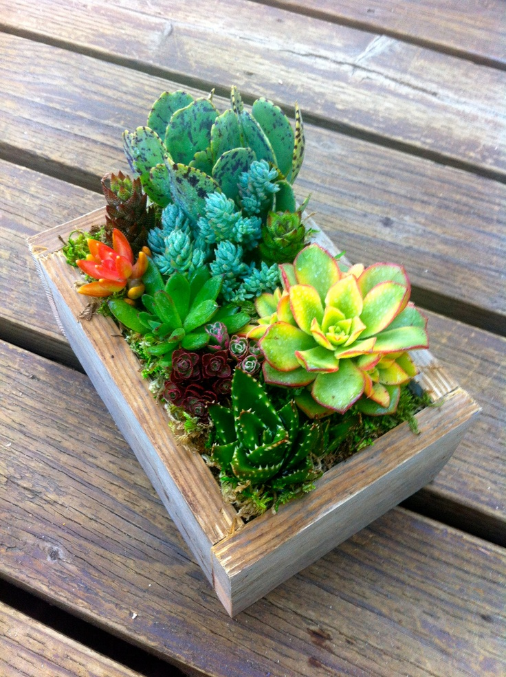 Multi-Colored Succulent Box. The only color in my gray and white room