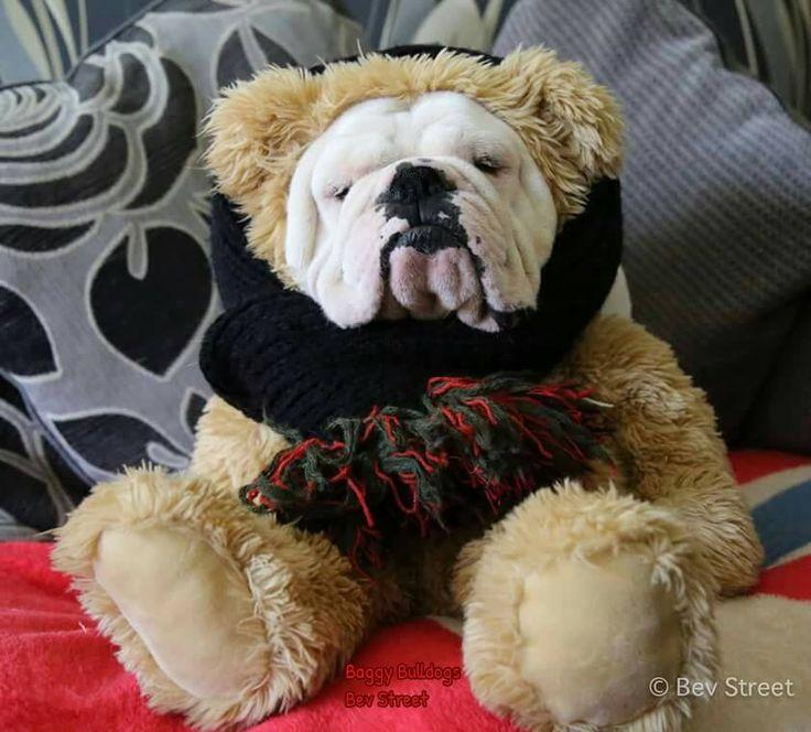 613 best Dog Halloween Costumes images on Pinterest | Dog ...