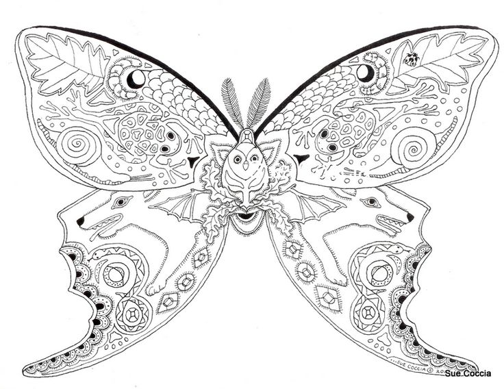 luna moth butterfly patterncoloring pages