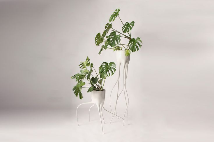 tim van de weerd constructs haphazard roots for monstera plant pots - designboom   architecture