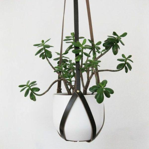 Grünpflanzen Green Plants Zimmerpflanzen: Hängende Zimmerpflanzen Ledergürtel Deko Ideen Blumenampel