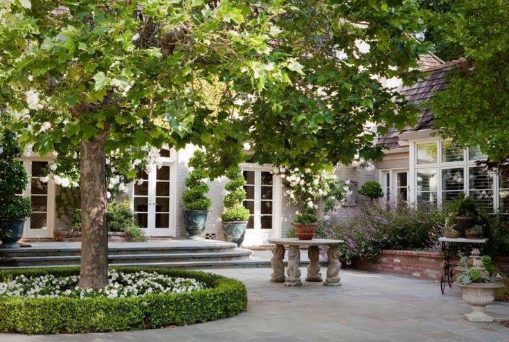 niedrige Buchsbaumhecke um den Baum und weiße Blumen