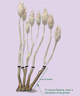 Best 25 comment tailler les hortensias ideas on pinterest tailler les hortensias taille - Faut il tailler les hortensias ...