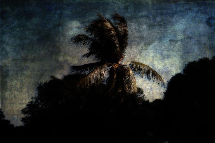 Dramatic Palm