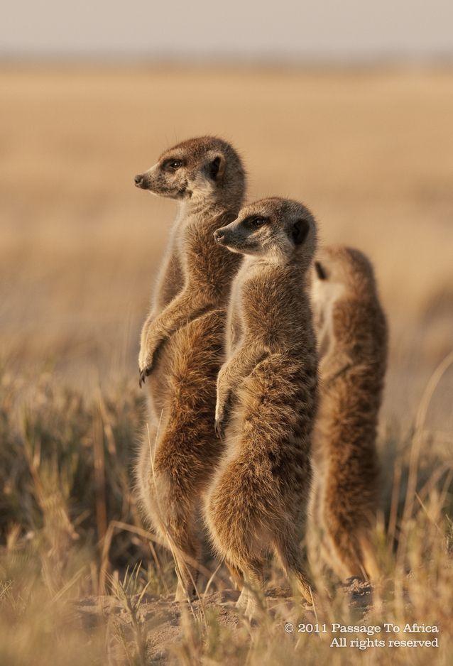 Makgadikgadi Pans, Botswana