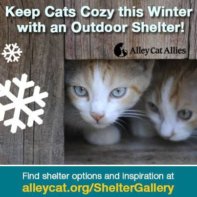 Best Purchase For Feral Cats Winter