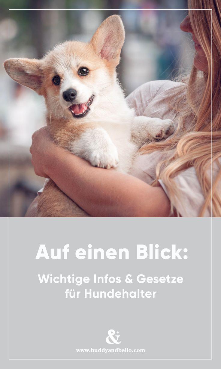 Auf Einen Blick Wichtige Infos Und Gesetze Fur Hundehalter Hunde Tierheim Hunde Gefahrliche Hunde