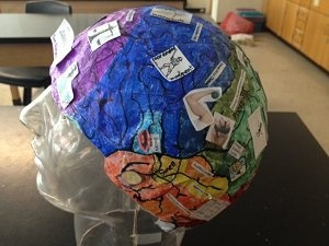Brain model. Use Styrofoam wig holder! Use clay to make the tube looking parts and cut in half to label the inside.
