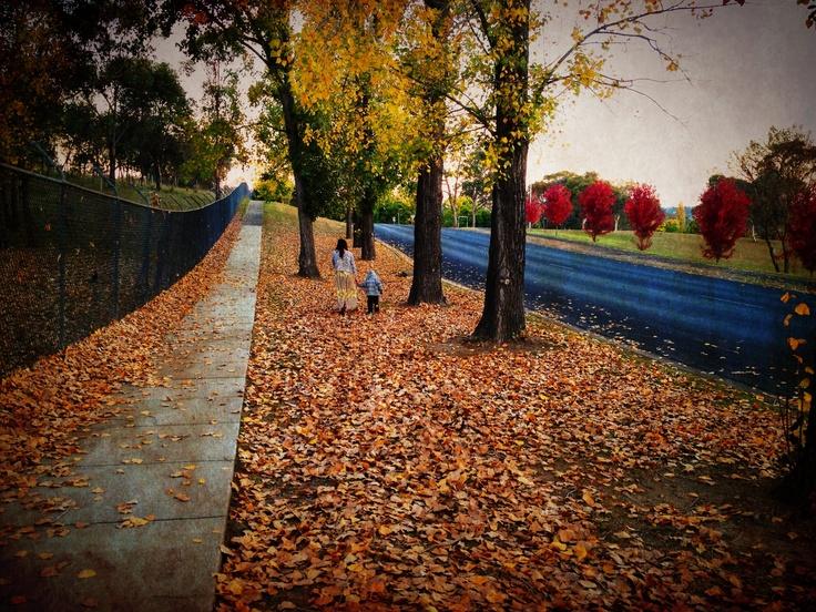Fall in Armidale - NSW - Australia