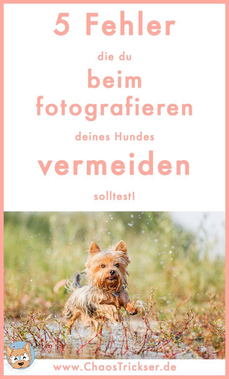 5-fehler-in-der-hundefotografie