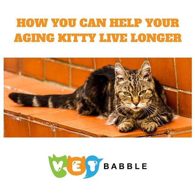 how long do cats live - 640×640