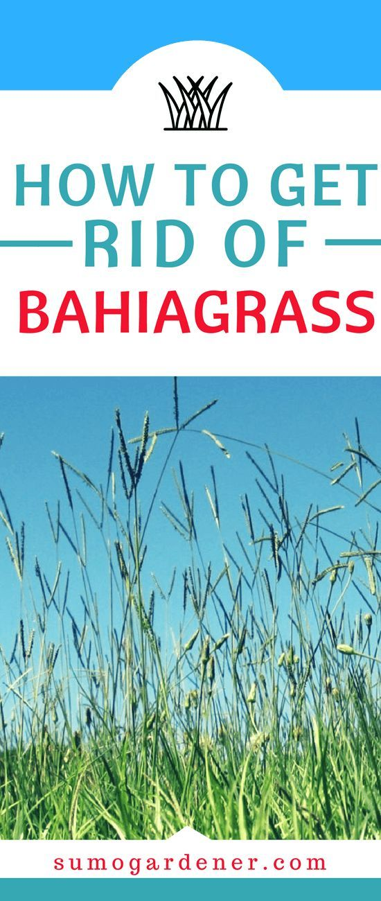 How To Get Rid Of BahiaGrass: Tips To Prevent Bahia Grass